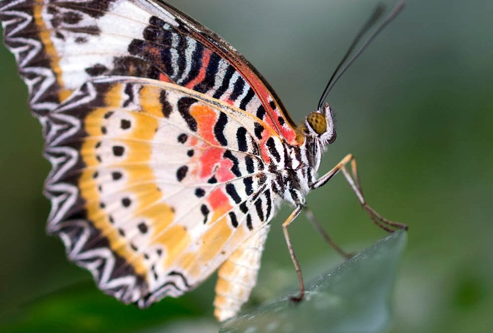 Monday Musings of a Butterfly